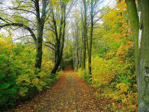 Nettoyons la nature @ Mairie à Roilaye | Saint-Étienne-Roilaye | Hauts-de-France | France
