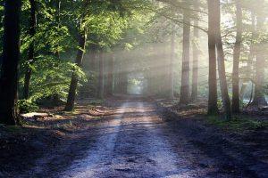 Nettoyons la nature et la planète @ St-Etienne-Roilaye | Saint-Étienne-Roilaye | Hauts-de-France | France