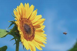 Attichy : plantes et produits locaux @ Attichy | Attichy | Hauts-de-France | France